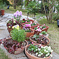 秋から冬への寄せ植え