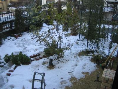 雪に埋まる庭