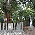 Kisyu_7046