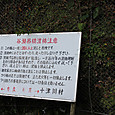 Kisyu_7180