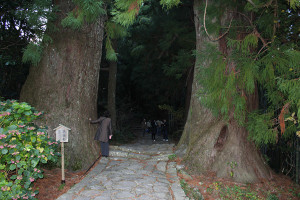 Kisyu_7111
